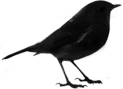 roambird